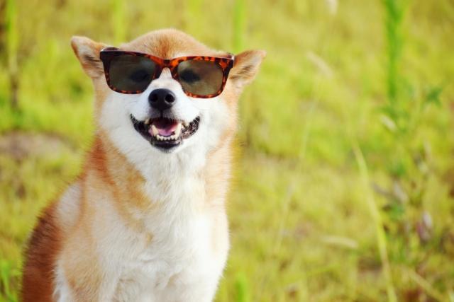 JINSで眼鏡を買ったら意外にコスパ良かったよ